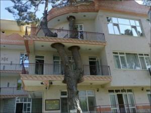 Árvore e prédio