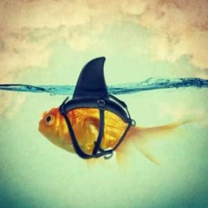 Peixe tubarão